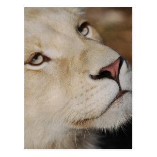 Ein leichter Löwe
