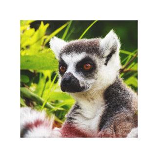 ein Lemur von Madagaskar auf eingewickelter Leinwanddruck