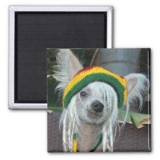 Ein Liebe chinesischer Rasta Hundemagnet mit Haube Quadratischer Magnet