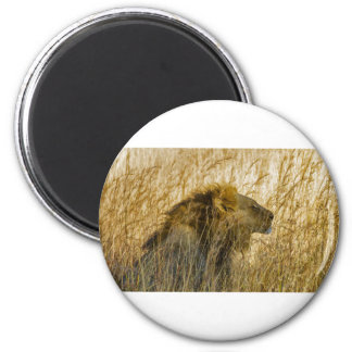 Ein Löwe wartet, Simbabwe Afrika Runder Magnet 5,7 Cm
