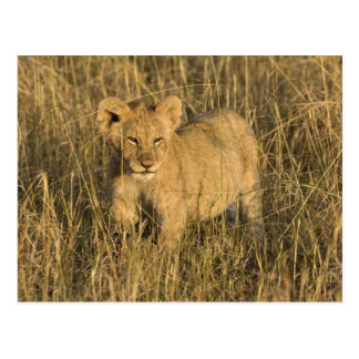 Ein Löwejunges, das in den Busch im Maasai Mara Postkarte