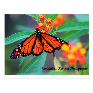 Ein Monarchfalter! Postkarte