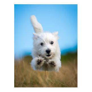 Ein niedlicher Westhochland-Terrier-Welpen-Betrieb Postkarte