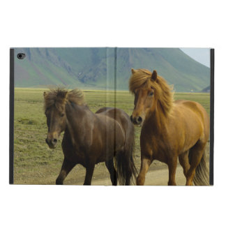Ein Paar Brown-Isländer-Ponys