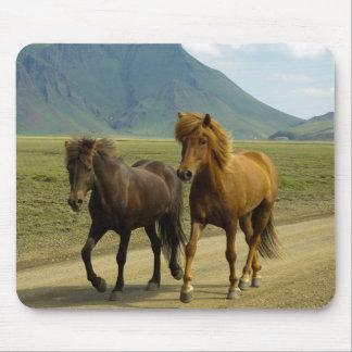 Ein Paar extravagante Brown-Isländer-Ponys Mousepad