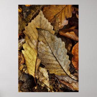 Ein Paar gefallenes Blätter Poster