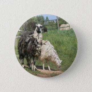 Ein Paar Lamas mit außergewöhnlich Wooly Mantel Runder Button 5,1 Cm