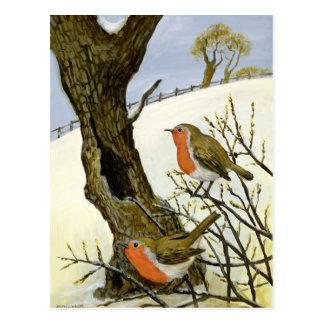 Ein Paar Rotkehlchen Postkarte