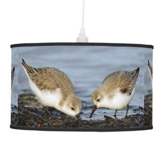 A Pair of Sanderlings Shares