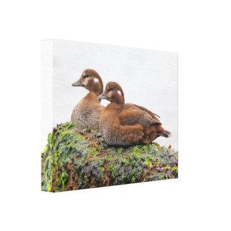 Ein Paar weibliche Harlekin-Enten auf den Felsen Leinwanddruck