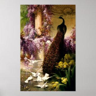 Ein Pfau und Tauben in einem Garten Ca 1888 Poster