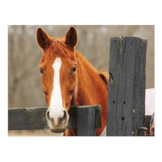 Ein Pferd, das eine Decke beim EckFencepost trägt Postkarte