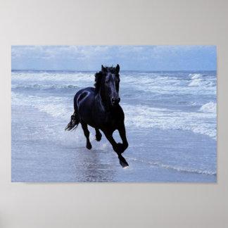 Ein Pferd wild und frei Plakatdruck