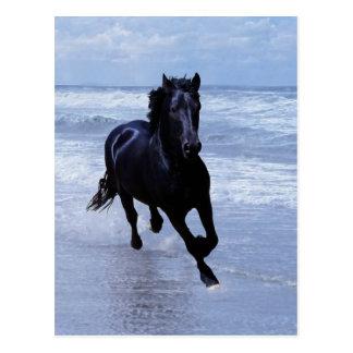 Ein Pferd wild und frei Postkarte
