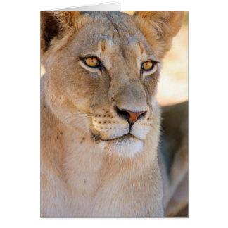 Ein Porträt einer Löwin, die den Abstand Karte