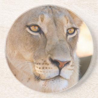 Ein Porträt einer Löwin, die den Abstand Untersetzer