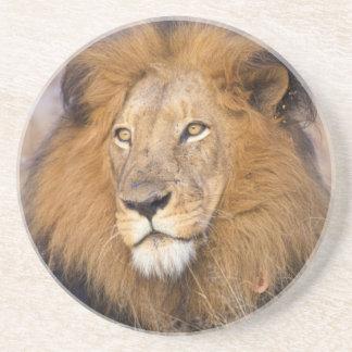 Ein Porträt eines Löwes, der den Abstand Getränkeuntersetzer