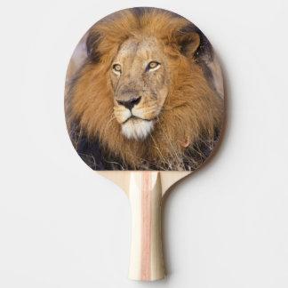 Ein Porträt eines Löwes, der den Abstand Tischtennis Schläger