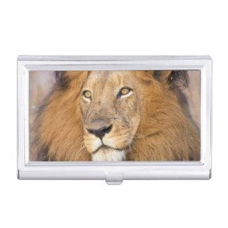 Ein Porträt eines Löwes, der den Abstand Visitenkarten Dose