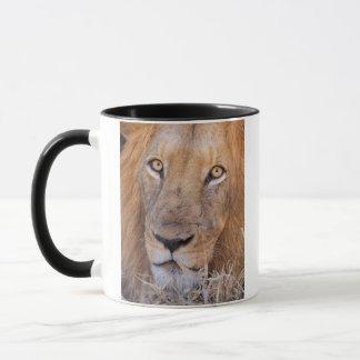 Ein Porträt eines Löwes Tasse