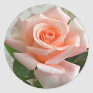 Ein reizende rosa Rosen-runder Aufkleber