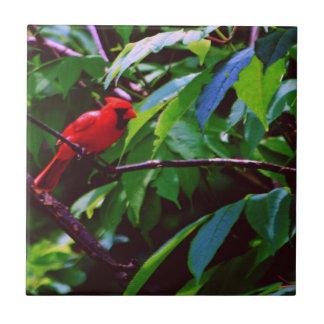 Ein roter Vogel sitzt auf einem Posten Fliese