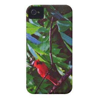Ein roter Vogel sitzt auf einem Posten iPhone 4 Hülle