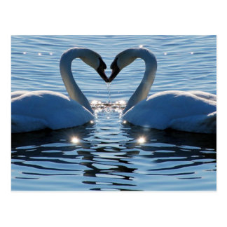 Ein Schwan-Herz-Kuss Reflexionen der Liebe Postkarte