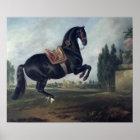 Ein schwarzes Pferd darstellend das Courbette Poster