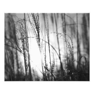 Ein Schwarzweiss-Foto des hohen Grases am Sonnenun