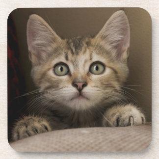 Ein sehr süßes Tabby-Kätzchen Getränkeuntersetzer