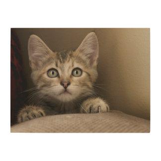 Ein sehr süßes Tabby-Kätzchen Holzleinwand
