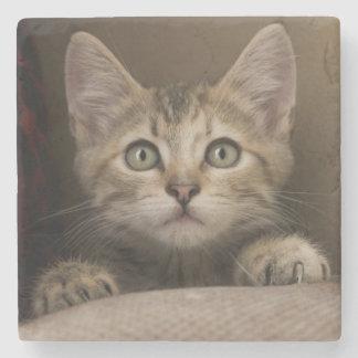 Ein sehr süßes Tabby-Kätzchen Steinuntersetzer