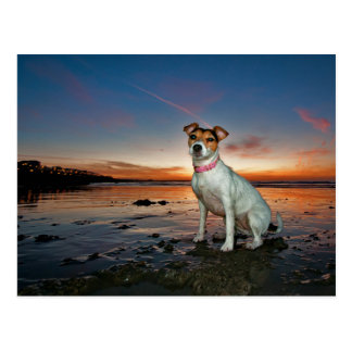 Ein sitzender Strand Jack-Russells Strand-| Postkarte