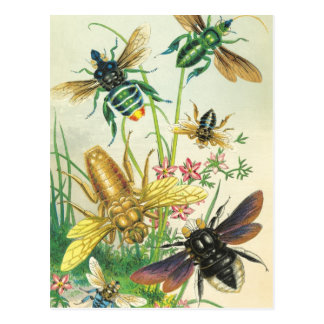 Ein Summen der schönen Bienen-Postkarten