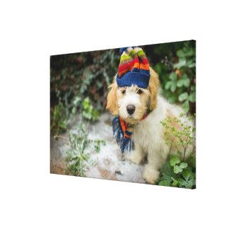 Ein süßer Cavachon Welpe in einem Winter-Hut und Leinwanddruck