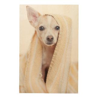 Ein TAN und weißen Chihuahua sitzen unter einem Holzleinwand