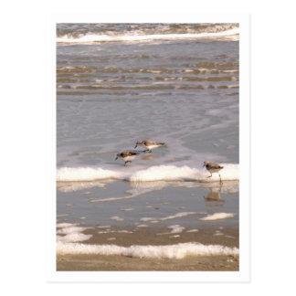 Ein Trio der Flussuferläufer Postkarte