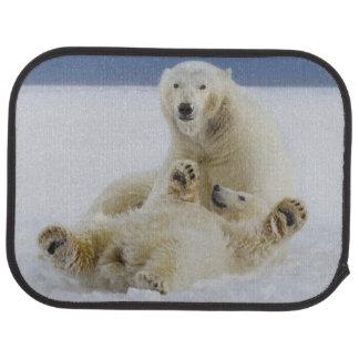 Ein weiblicher Eisbär und ihr Junges spielen im Autofußmatte