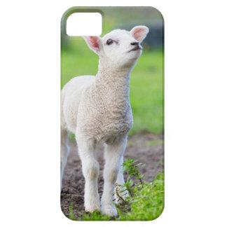 Ein weißes neugeborenes Lamm stehend im grünen Barely There iPhone 5 Hülle