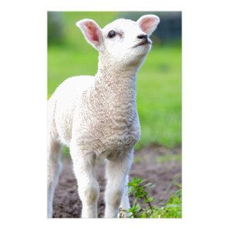 Ein weißes neugeborenes Lamm stehend im grünen Briefpapier