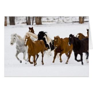 Ein Winter landschaftlich von laufenden Pferden Karte