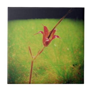 Eine Blume Kleine Quadratische Fliese