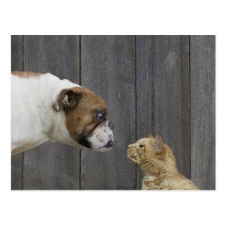 Eine Bulldogge und eine Katze sind in einem Stand Postkarte
