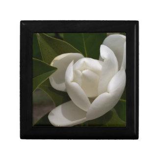 eine cremefarbene Magnolien-Blumenknospe Erinnerungskiste