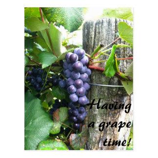 eine große Traubenzeit-Weinbergweinkellerei haben Postkarte