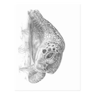 Eine grüne Meeresschildkröte im Grayscale Postkarte