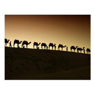 Eine Gruppe Kamel-Hirten mit ihren Kamelen an Postkarte