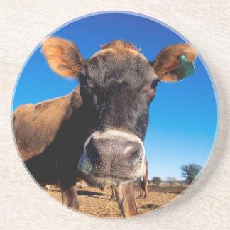 Eine Jersey-Kuh, die neugierig ist Sandstein Untersetzer