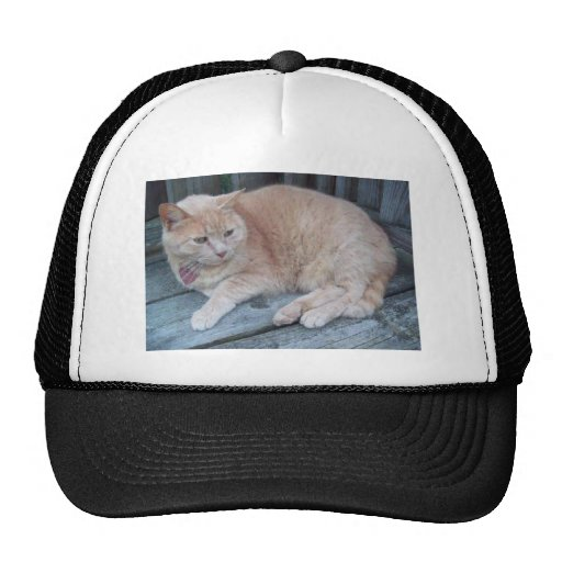 Eine Katze genannt Buffalo Baseball Mütze